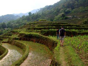 Vietnam bezienswaardigheden Rijstvelden
