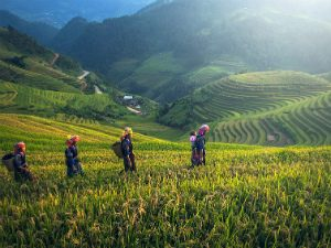 Trekking noord Vietnam 1