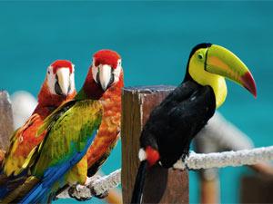 Cahuita Costa Rica Kids -toekan