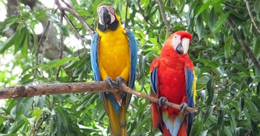 Rondreizen Costa Rica: Aras