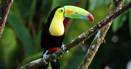 Rondreizen Costa Rica - toucan