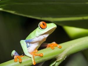 costa-rica-rondreizen-kikken