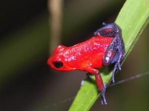costa rica-reis-kikkertje Monteverde
