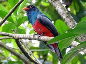 vogels-spotten-costa-rica-teens