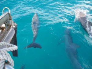 Ojochal Costa Rica met kinderen - dolfijnen
