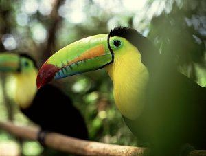 Boca Tapada jungle met boomhut