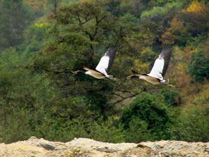 bhutan kraanvogel vallei