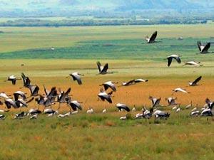 reizen bhutan kraanvogels