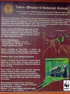 bhutan thimpu zoo