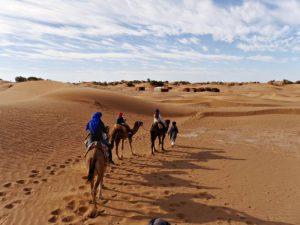 woestijn zagora dromedaris