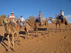op kameel in de duinen