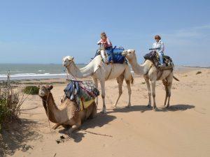 Marokko strand kamelen