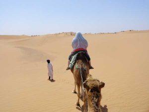 lihoudi-woestijn kamelen