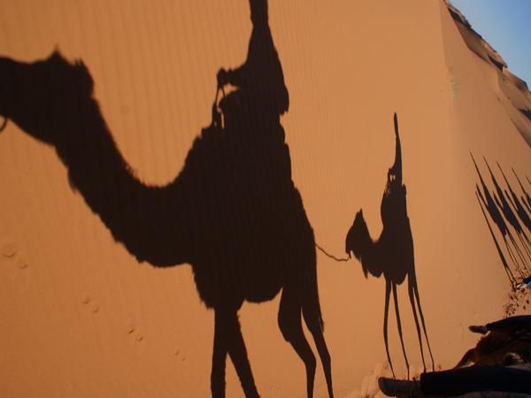 woestijn Marokko Kids - kamelentocht