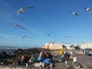 Vakantie Essaouira Marokko met kinderen
