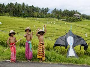 Gezinsvakantie Bali - rijstvelden met kinderen