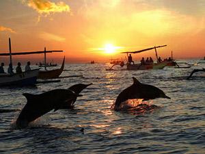 gezinsvakantie bali dolfijnen