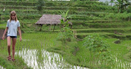 Wandelen door rijstvelden - reis Bali