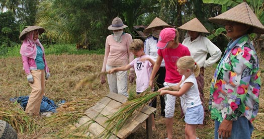 Rijst oogsten Bali reis