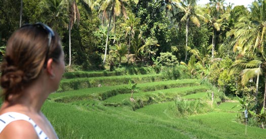 Rondreis Bali: rijstvelden