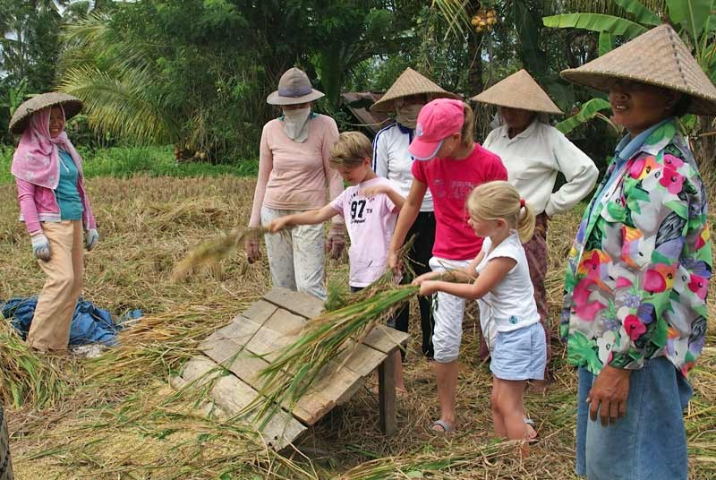 Oogsten rijst vakantie Bali kinderen