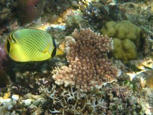 Indonesië Gili Eilanden Onderwaterwereld