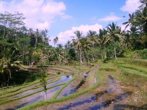 Rondreis Indonesië met kinderen - Ubud