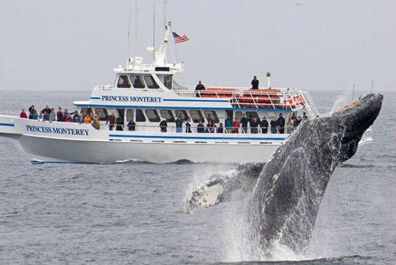 Walvis-spotten-Monterey