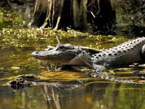 Everglades Florida met kinderen