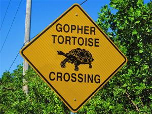 florida sanibel schildpadden amerika