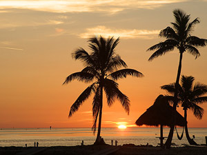 reis florida kinderen palm amerika