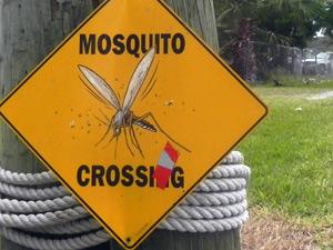 florida everglades muggen amerika