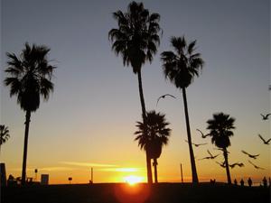 Reis Los Angeles
