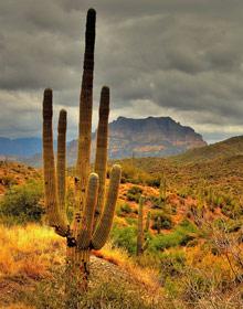 Amerika klimaat cactus wolk
