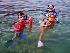 vakantie florida zeekoeien amerika