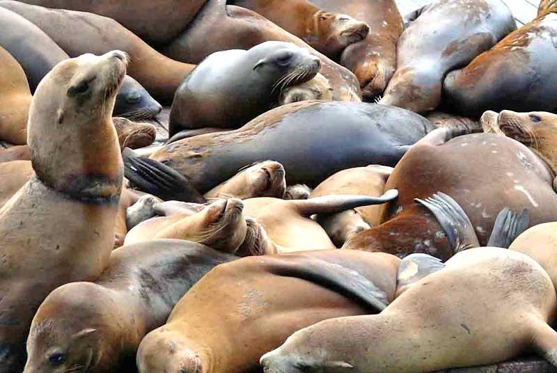 Amerika vakantie: zeehonden