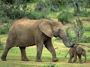 addo olifantenpark zuid afrika
