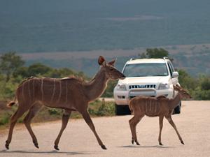 Addo National Park met kinderen