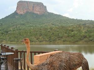 big five lodge zuid afrika