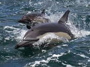 dolfijnentoch zuid afrika