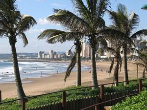 durban strand palmbomen zuid afrika