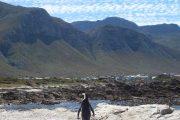 Rondje Kaap