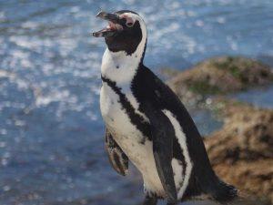 pinguin-kaapstad-met-kinderen