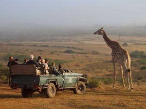 safari-kaap-zuid-afrika-met-kinderen