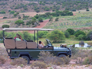 zuid afrika west kaap jeep