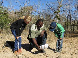 spoorzoeken-zuid-afrika