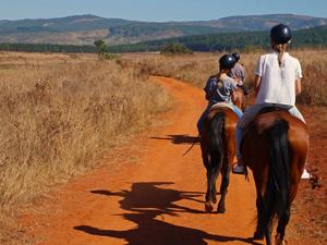 Stap op je paard tijdens je fly drive Zuid-Afrika