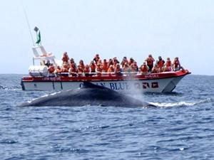 walvistocht zuid afrika boot