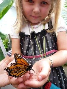 zuid-afrika-meisje-met-vlinder