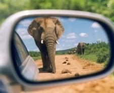 Slingerende slurf safari